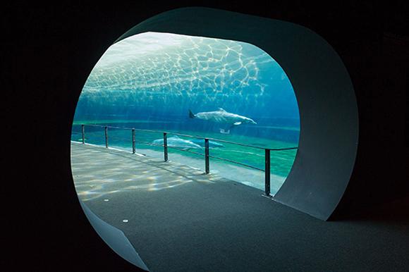 Le facciate del nuovo padiglione cetacei for Blu di metilene acquario